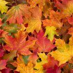 Quoi faire en automne à Terrebonne ?